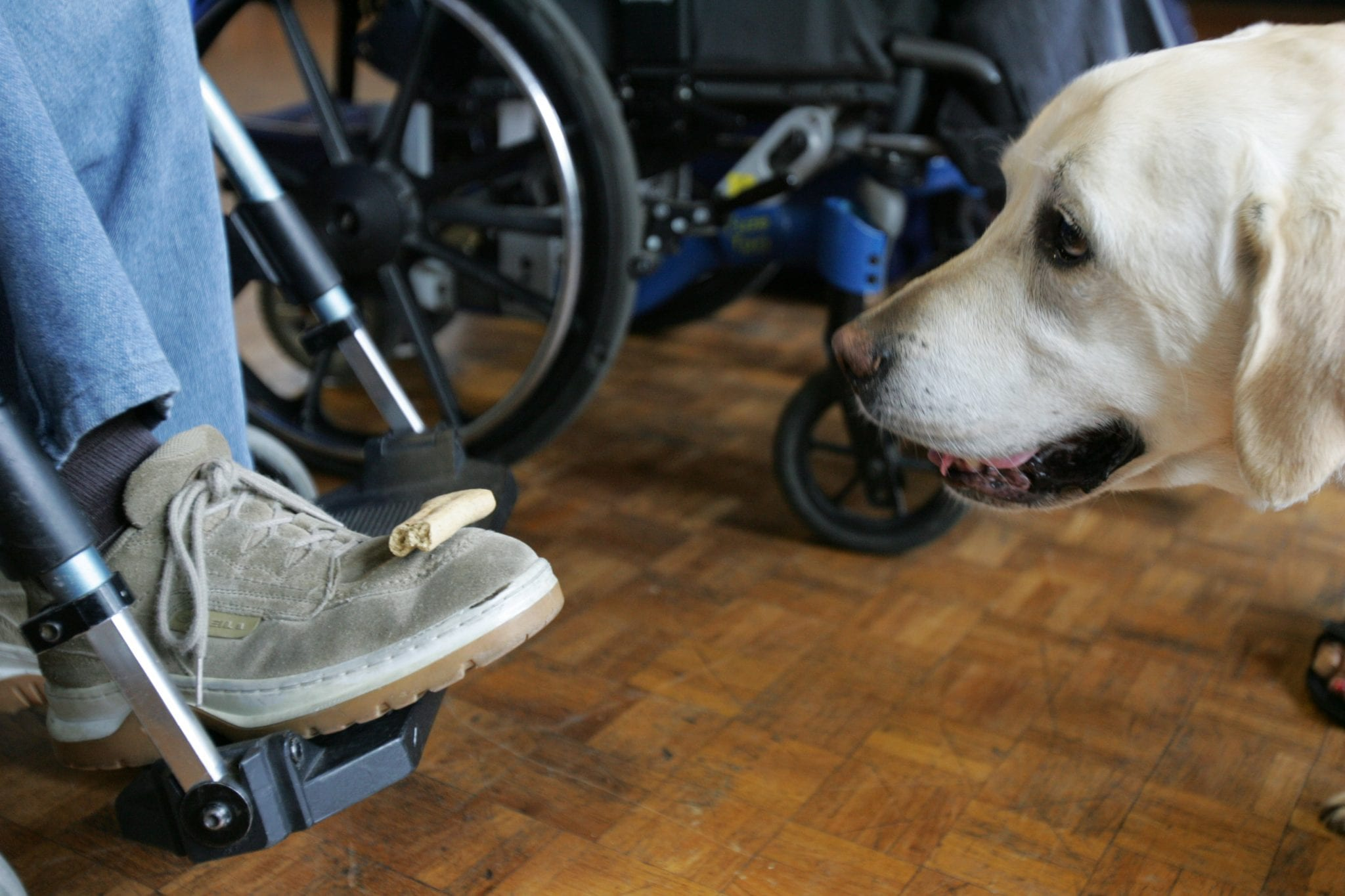 how to get a therapy dog visit